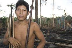 Un Indien awá dans sa forêt incendiée. © Survival