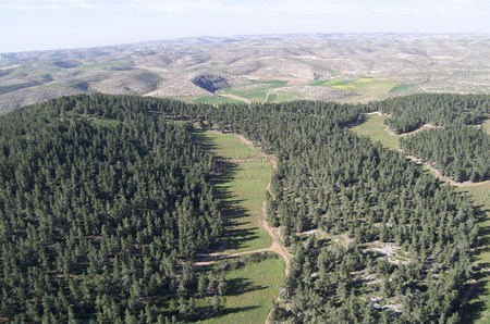 Yatir Forest. Photo : Albetros, KKL-JNF Photo Archive