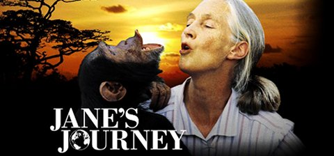 Le long voyage de Jane Goodall