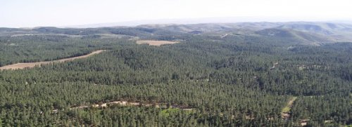 Yatir forest. Photo : Benny Mor, KKL-JNF Jerusalem
