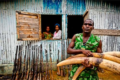 © WWF-Canon / James Morgan - Saisie du commerce illégal de l'ivoire